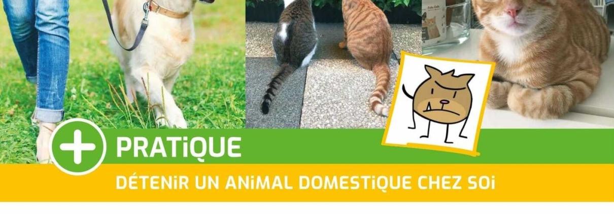 PRATIQUE détenir un animal dom cadrée web 1210x423 - AB-Habitat