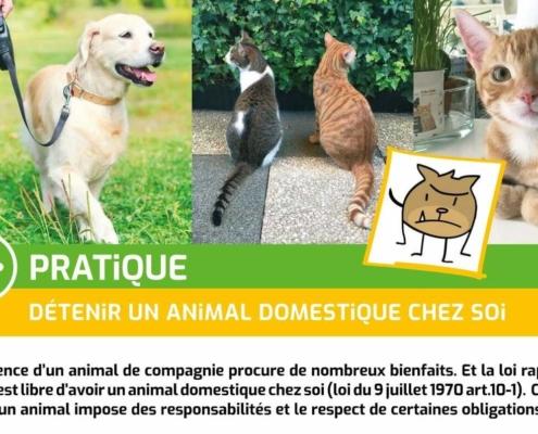 PRATIQUE détenir un animal dom cadrée web 495x400 - AB-Habitat